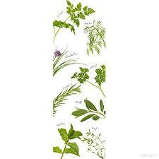 les herbes aromatiques en cuisine 162271 sticker pour cuisine et réfrigérateur de herbes aromatiques
