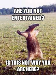 Why You Not Meme - are you not entertained is this not why you are here anteater