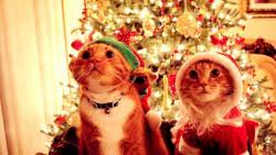 christmas cats freechristmaswallpapers net