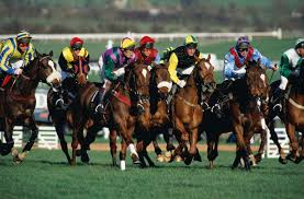 Animal Trainers Salary Ways Racehorse Trainers Make Money