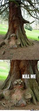 Tree Meme - tree memes best collection of funny tree pictures