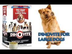 dino vite reviews kickstart your kibble with stella chewy s chewy s chicken meal