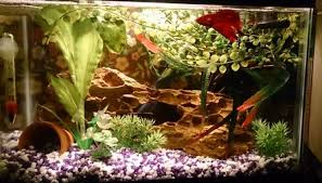 led reef lighting reviews best led aquarium lighting for plants corals 2018 reviews