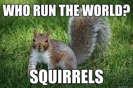 Squirrel Meme - funny squirrel memes 28 images squirrel memes squirrel meme