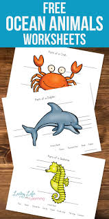 parts of ocean animals worksheets worksheets ocean and animal