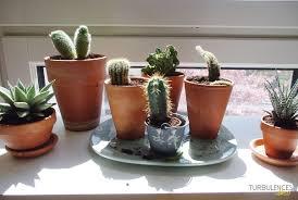 decoration avec des pots en terre cuite des plantes devant la fenêtre