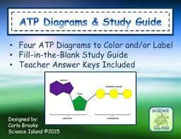 atp diagrams and study guide by scienceisland teaching resources