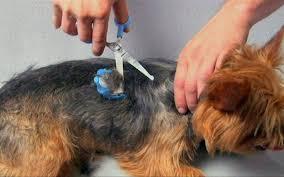 dog hair cutting table dog hair cutting machine dog haircut machine ebay norwegiandl info