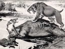 dire wolf and sabre tooth cat bones what prehistoric hunts were