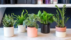 plante verte dans une chambre à coucher chambre plantes depolluantes pour maison monblogyoga coucher plante