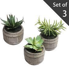 Amazon Succulents Amazon Com Assorted Mini Artificial Succulents Plants In Rustic