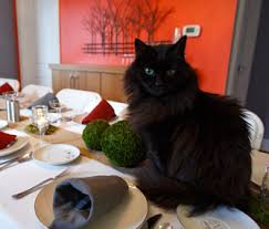 your cat etiquette guide what to keep in mind if you re hosting