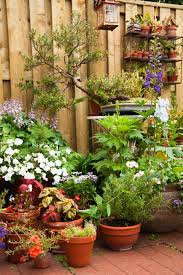 Types Of Gardening Plants These Stunning Container Plants Add Wow Factors To Gardens
