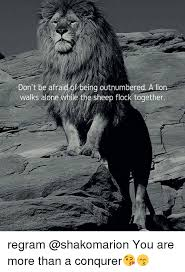 Together Alone Meme - don t be affaid of being outnumbered a lion walks alone while the