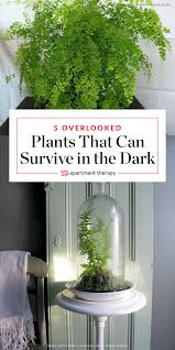 plants that don t need light 5 overlooked plants that can survive the dark almost plants