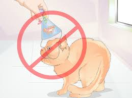 cat in the hat writing paper 3 ways to make a cone hat for a cat wikihow