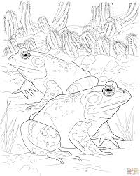 oriental fire bellied toad coloring page free printable coloring