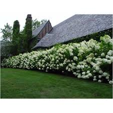 Landscaping Backyard Ideas Best 25 Privacy Landscaping Ideas On Pinterest Privacy Trees