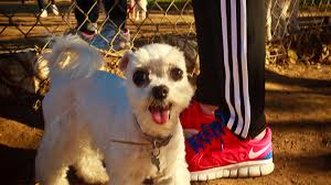 How Do Blind Dogs Know Where To Go Nothing But The Dog In Me Pet Friendly Los Angeles Discover Los