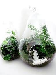 269 best terrariums and mini gardens images on pinterest