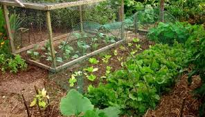 Permaculture Vegetable Garden Layout 7 Steps To Create A Permaculture Garden Hobby Farms