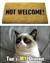 Frown Cat Meme - fancy the cat testing testing
