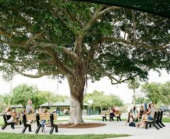 small town big heart and the tree bringing people together