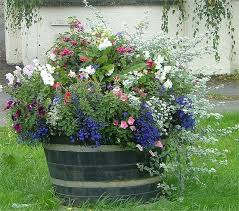 Half Barrel Planters by 45 Best Landscaping Ideas Images On Pinterest Backyard Ideas