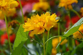 free photo yellow flower garden solid free image on pixabay