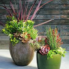 38 ideas for succulents in containers tall plants large plants