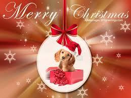 dog christmas dog christmas cards 365greetings