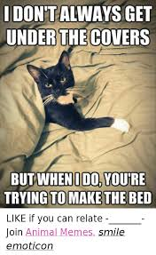 Animal In Bed Meme - 25 best memes about animals memes animals memes