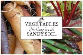 10 best vegetables for sandy soils empress of dirt