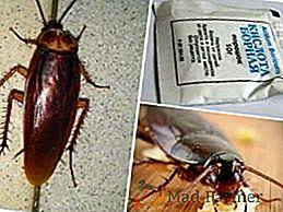 cafards cuisine remède populaire pour les cafards acide borique avec oeuf