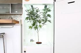 leaf cannabis home growing system cool hunting