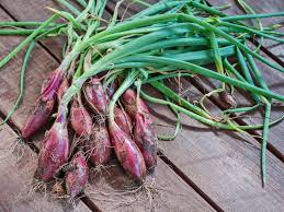 A Root Vegetable - growing 10 root vegetables successfully