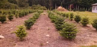 suståne planter packs for maximizing growth on christmas tree