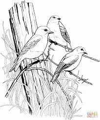 free coloring pages of birds download coloring pages coloring pages birds coloring pages