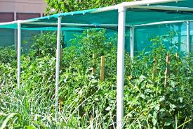 Garden Shade Ideas Shade Cloth For Vegetable Gardens Pinterest Home Decor Ideas