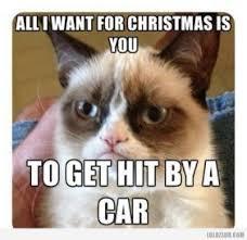 19 Awesome Grumpy Cat Christmas - 19 best grumpy cat christmas memes images on pinterest grumpy cat