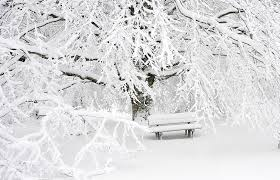 photos of snow free images landscape tree nature forest branch snow cold
