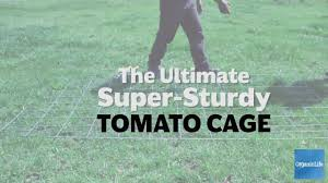 a cat u0027s cradle for tomatoes