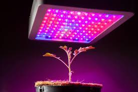 what is the best lighting for growing indoor the best led grow lights for your indoor garden bob vila