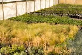 oklahoma native plants new u0026 improved u2013 cleveland county lifestyle magazine