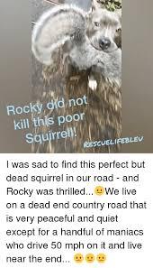 Dead Squirrel Meme - 25 best memes about dead squirrel dead squirrel memes