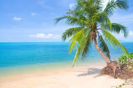 photo beach sea nature palm trees horizon trees