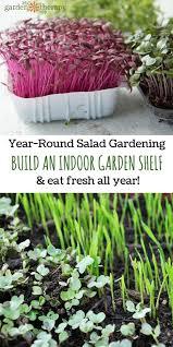 year round salad gardening how to build an indoor garden shelf