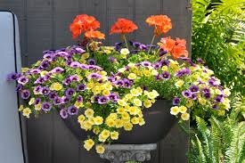 Summer Container Garden Ideas Summer Container Combo With Caliente Geraniums And Purple