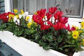 planter box ideas for front yard