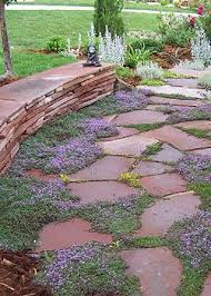 Backyard Ground Cover Options Best 25 Thyme Plant Ideas On Pinterest Ground Cover Plants
